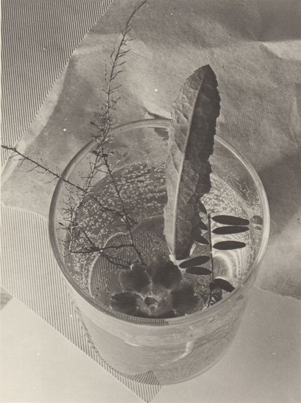 Glass With Leaf , 1931 Silver print 7.75 x 6.25 inches