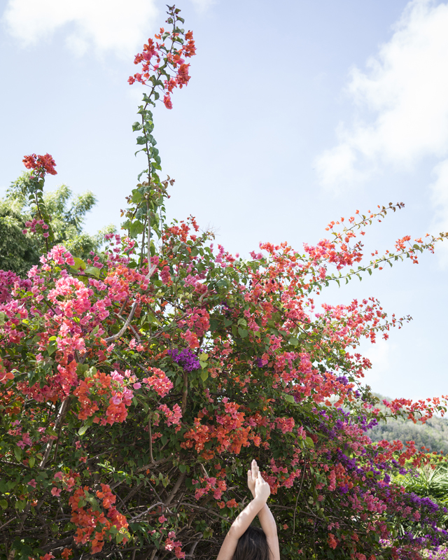 Bougainvillea, Bequia , 2018  Chromogenic dye coupler print  20 x 16 inches, Edition of 10 40 x 30 inches, Edition of 7