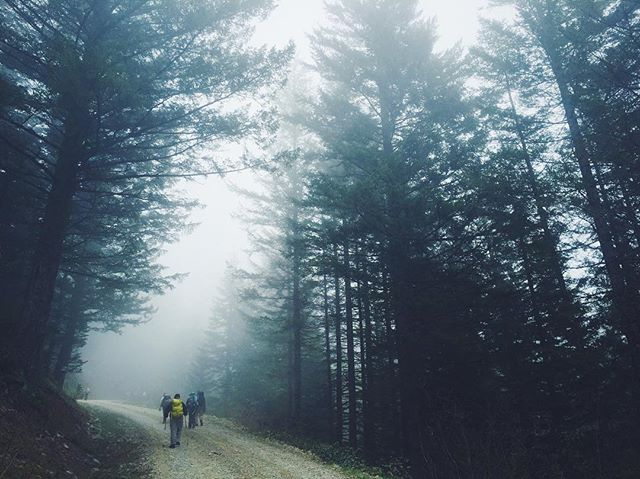 Into the mist we go // Chimney Rocks, WA