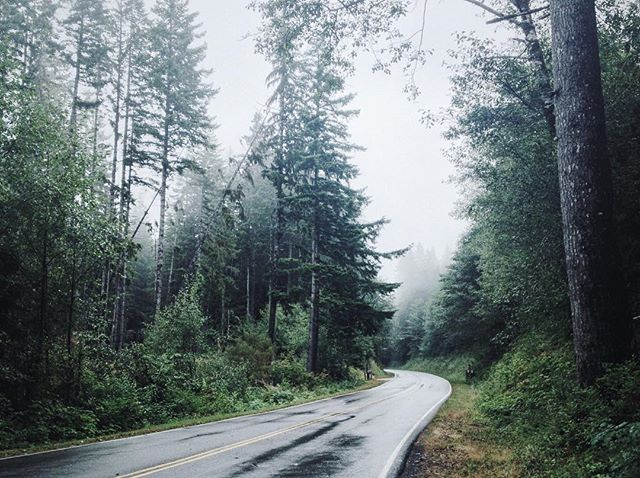 Just around the bend // Olympia WA
