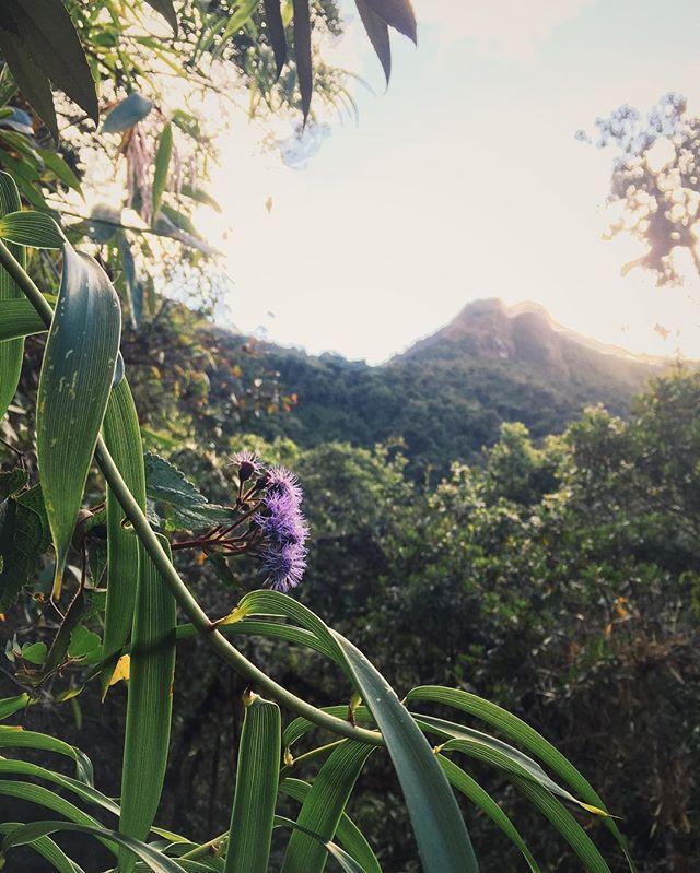 El morado // Inca Trail, Peru