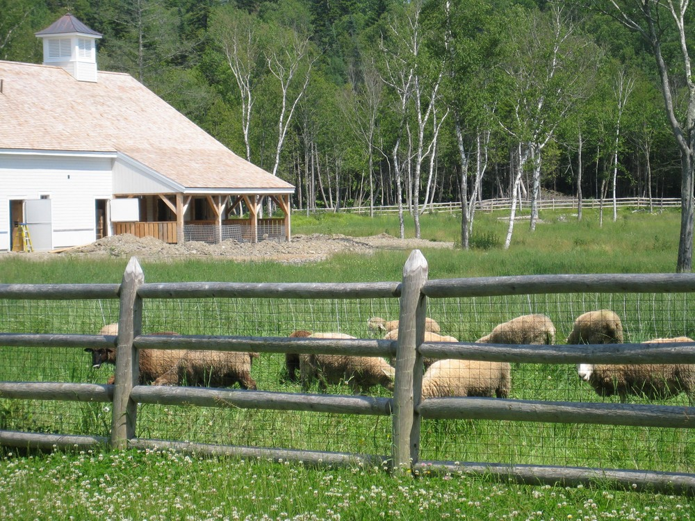sheep_barn.jpg