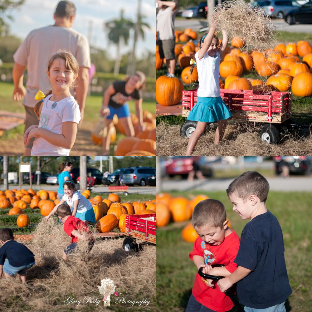 pumpkinP5.jpg