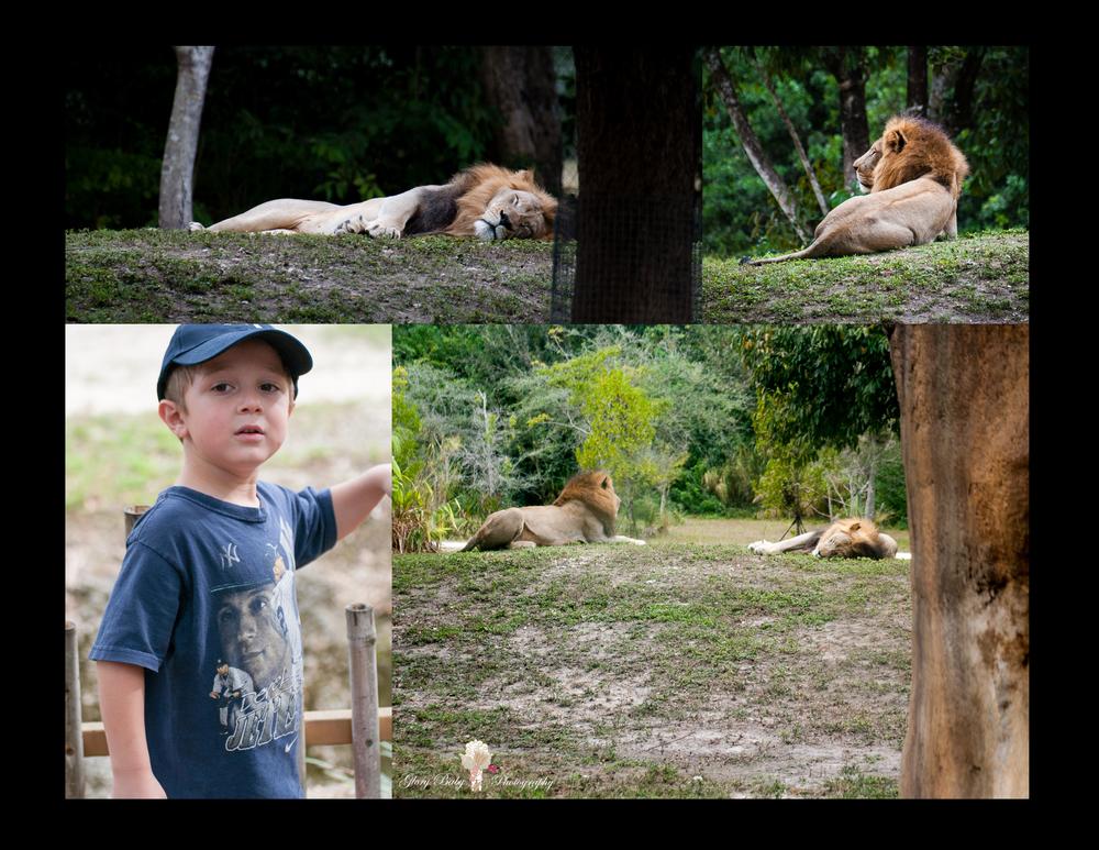 Zoo9.jpg