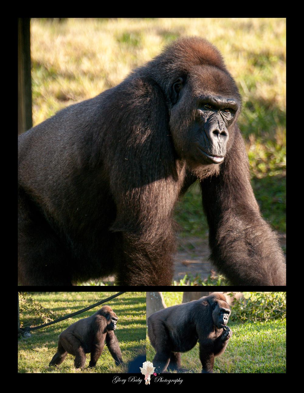 Zoo17.jpg