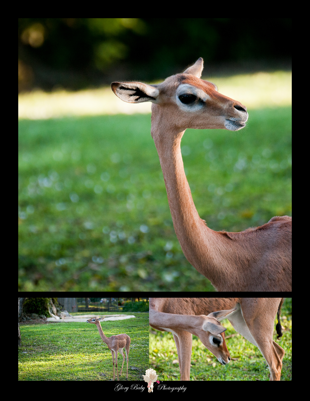 Zoo18.jpg