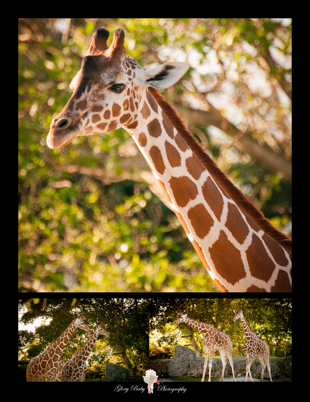 Zoo19.jpg