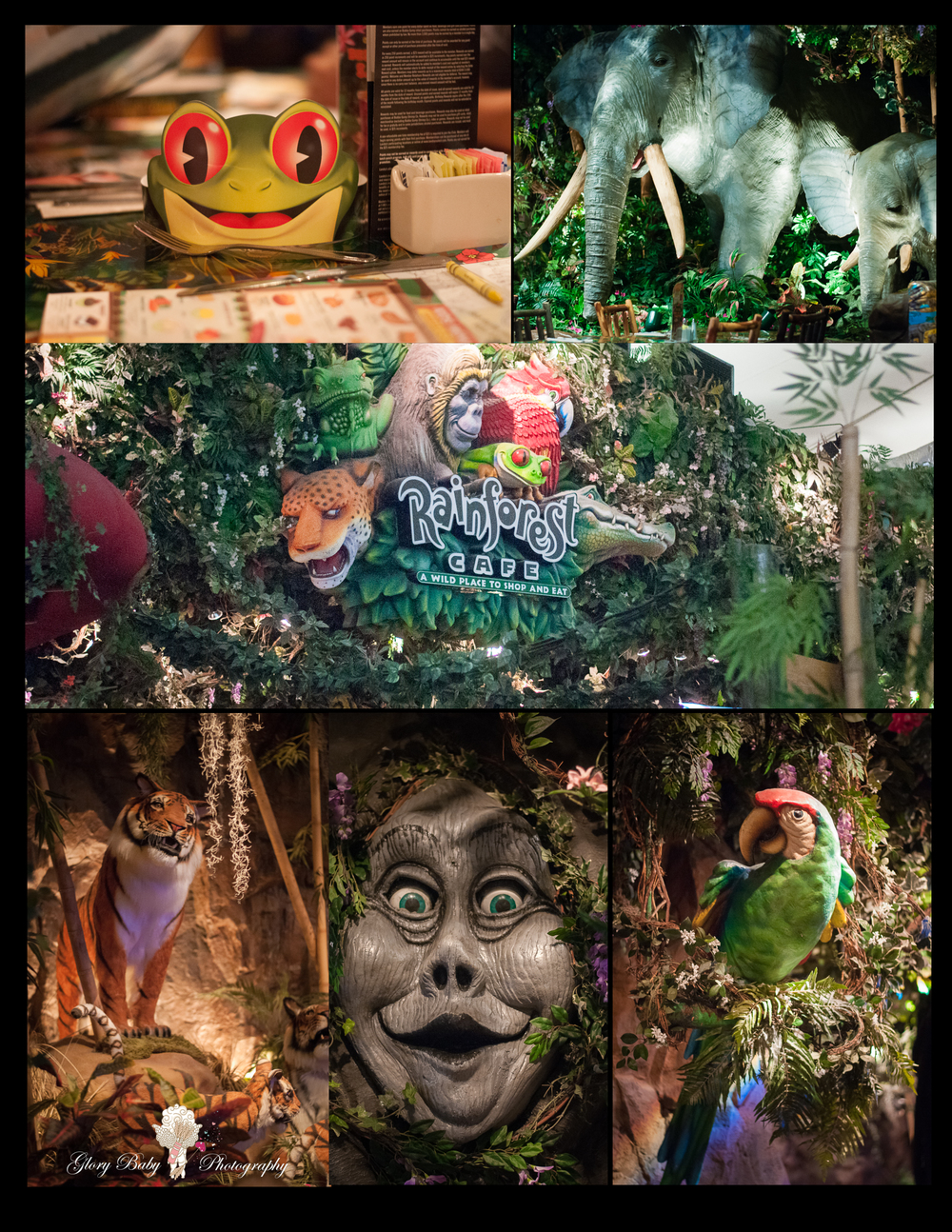 rainforest2015.jpg