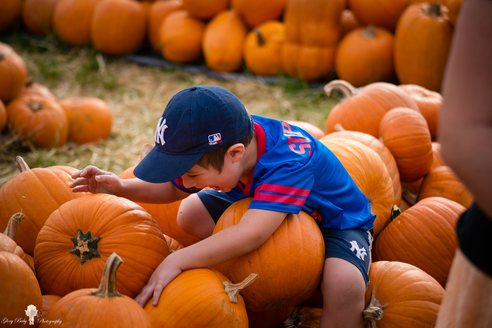 PumpkinPicking2015wm (5 of 64).JPG