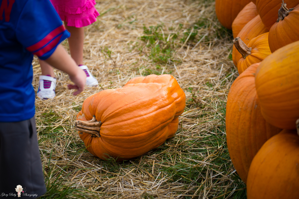PumpkinPicking2015wm (6 of 64).JPG