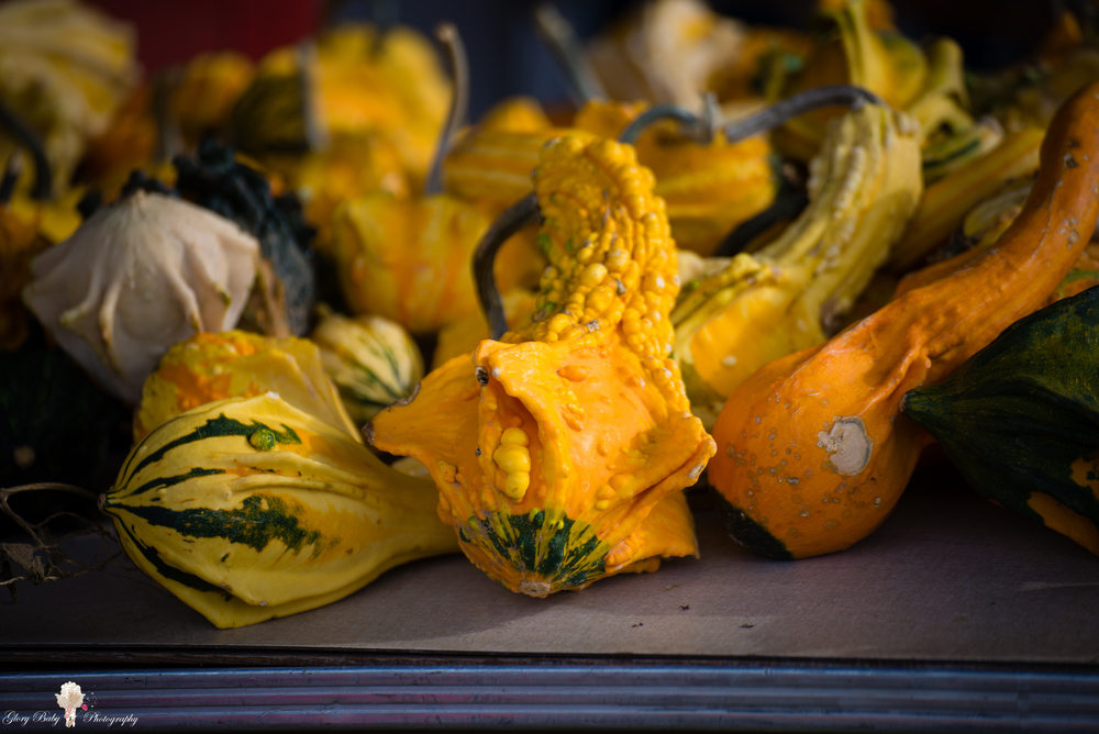 PumpkinPicking2015wm (14 of 64).JPG