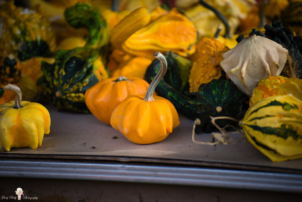 PumpkinPicking2015wm (15 of 64).JPG