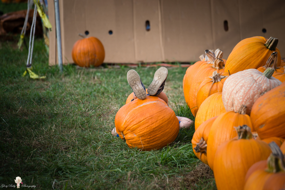 PumpkinPicking2015wm (22 of 64).JPG