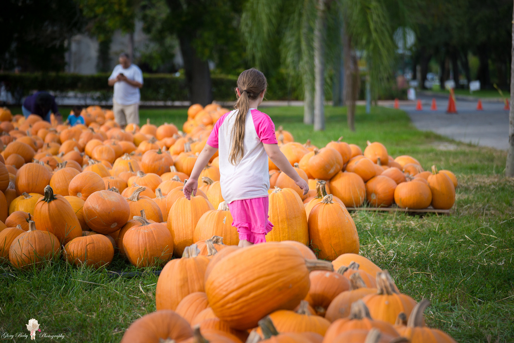 PumpkinPicking2015wm (50 of 64).JPG