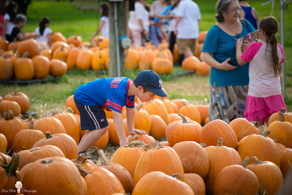 PumpkinPicking2015wm (56 of 64).JPG