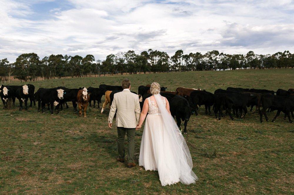 waldara farm oberon wedding photographer erin latimore 43.jpg