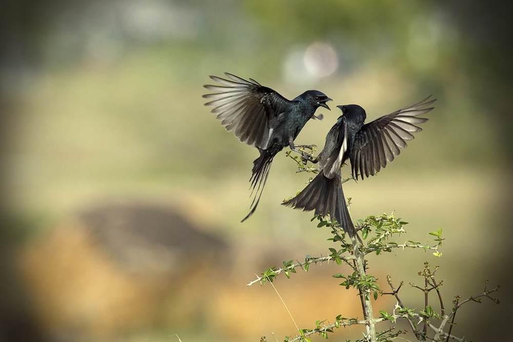 two_birds.jpg