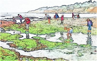 Children Observe a Tide-pool by looking closer and seeing more.