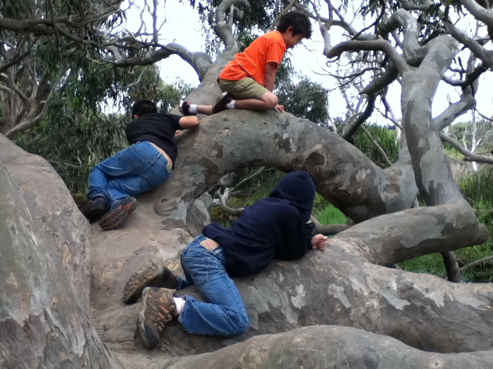 Eudora's branches are perfect for climbing upon.