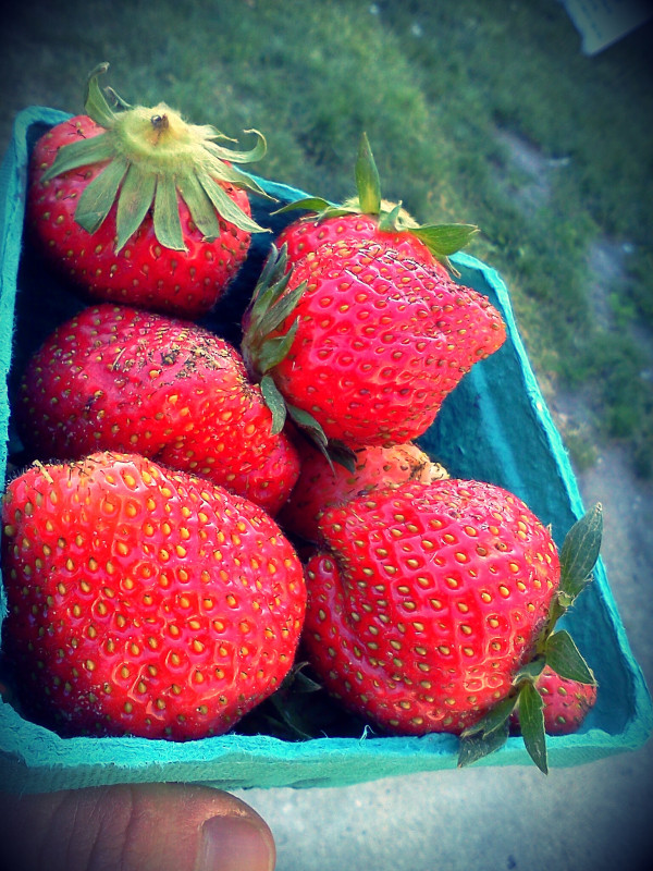 Strawberries from Seedling