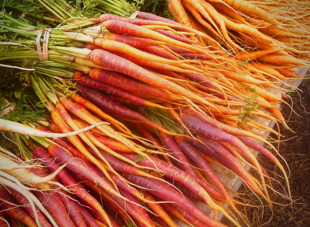 Colorful Carrots at Green CIty Market