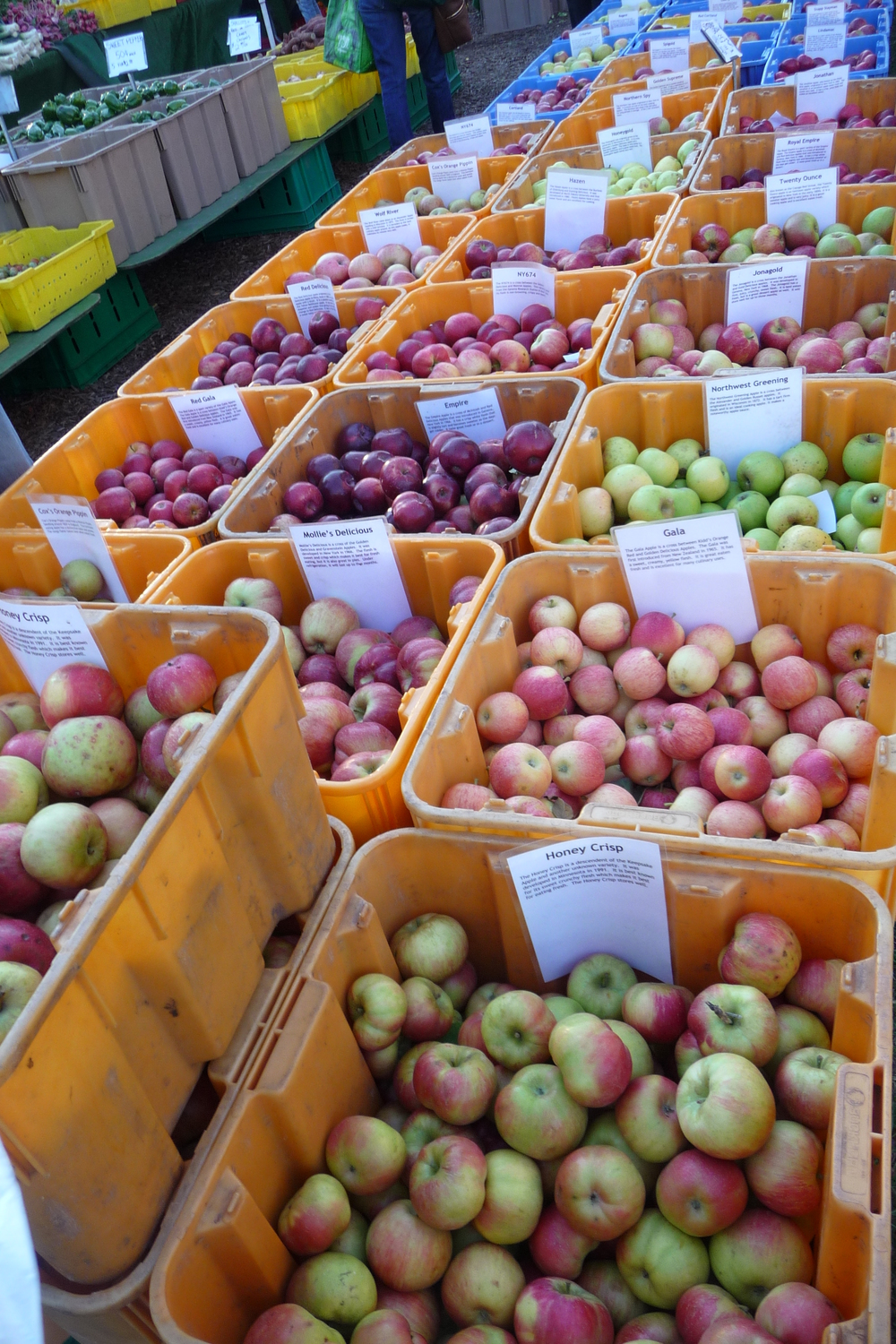 Join me as we explore the many varieties of apples