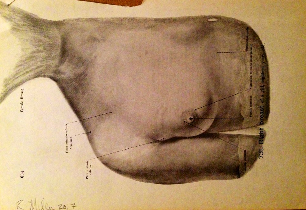 Melon-Headed Whale, 2017 Charcoal on antique medical paper