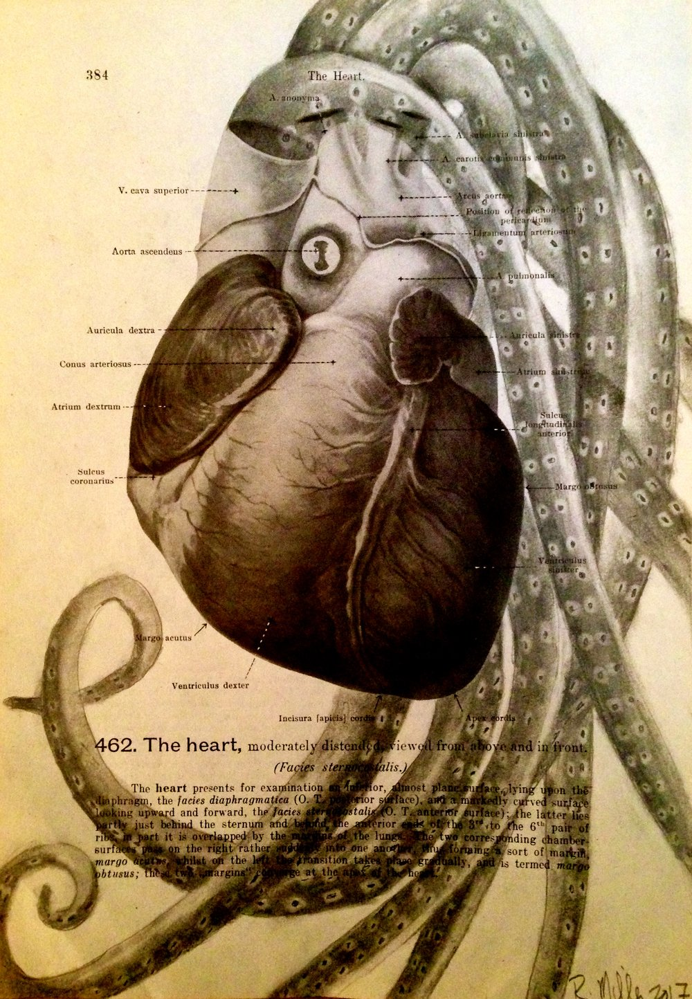 1861 Anatomy paper for human heart, I see octopus Heartopus, 2017 Charcoal on antique 1861 medical paper
