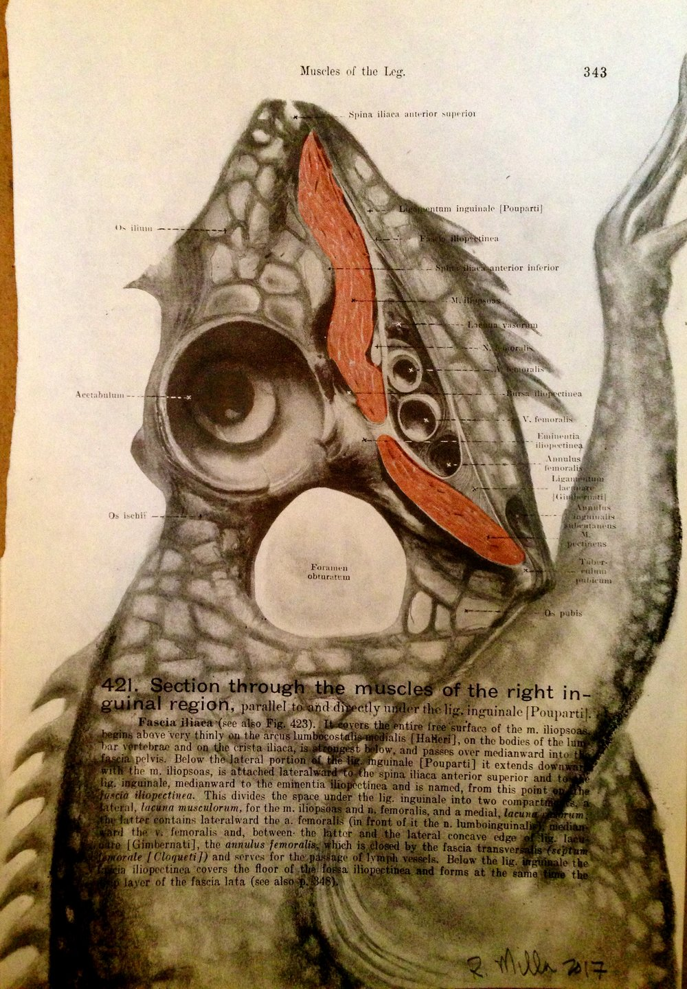 1861 Anatomy paper for leg muscle, I see a legasaurus Legasaurus Rex, 2017 Charcoal on antique 1861 medical paper