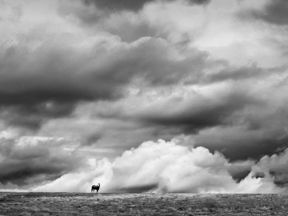 A lone horse grazes on a grassy hillside against a backdrop of stormy winter clouds in the Central Valley of California