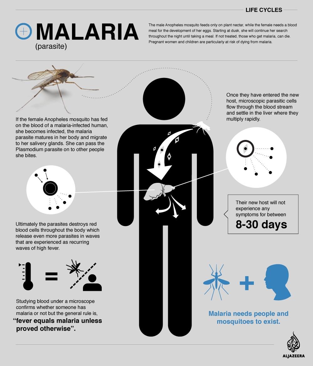 Malaria Infographic_Aljazeera.jpg