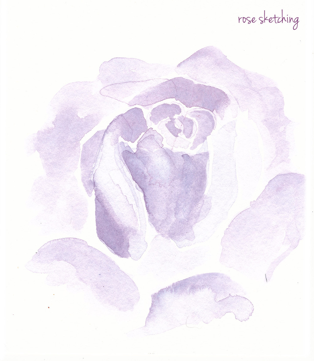 rose-sketches-purple.jpg