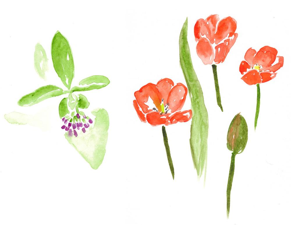 drawingsarah.com_flower5.jpg