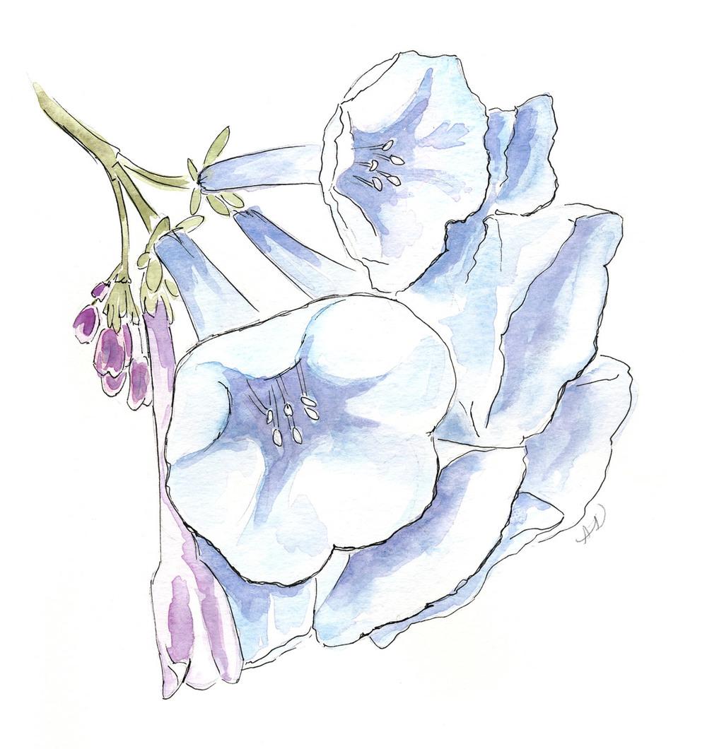 drawingsarah.com_pflower.jpg