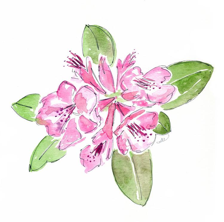Pretty pink flowers drawing sarah drawingsarahpinkflowerg mightylinksfo Images
