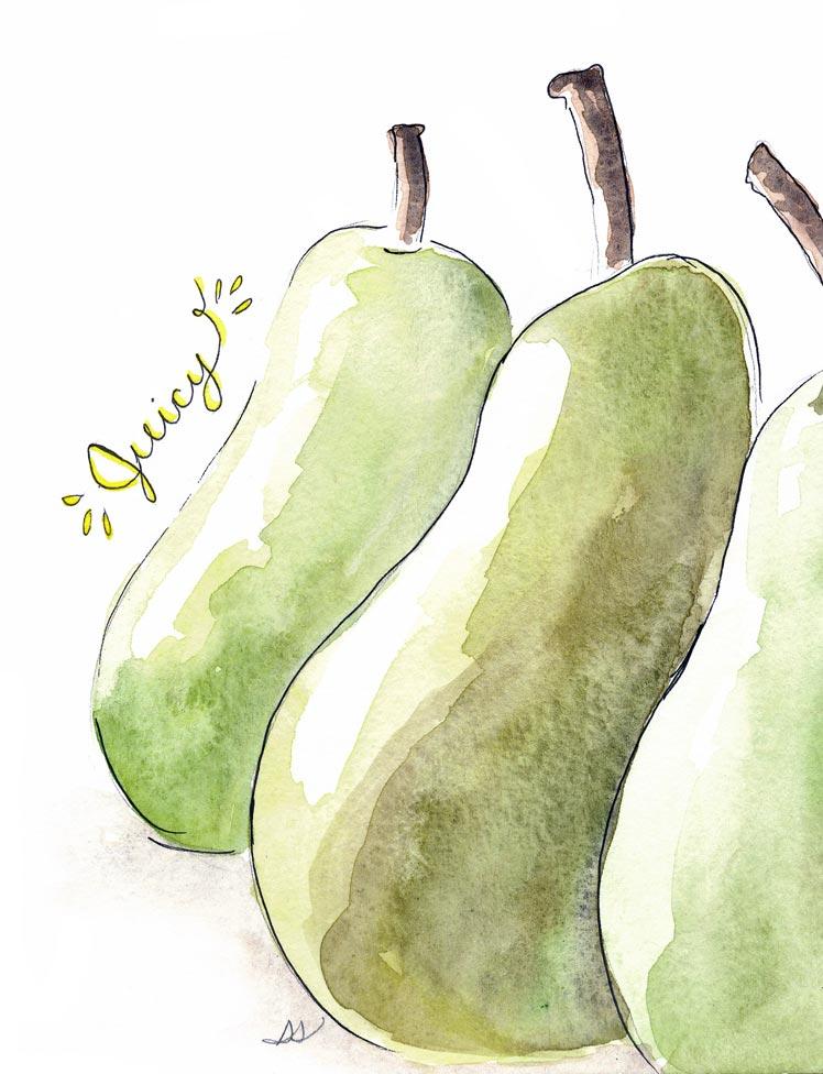 drawingsarah.com_pear.jpg