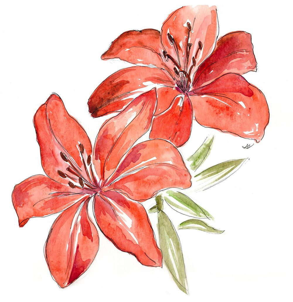 Lily Flower Drawings In Color Www Pixshark Com Images