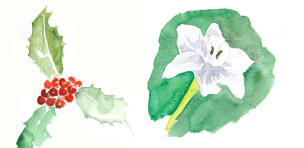 drawingsarah.com_decflowers.jpg
