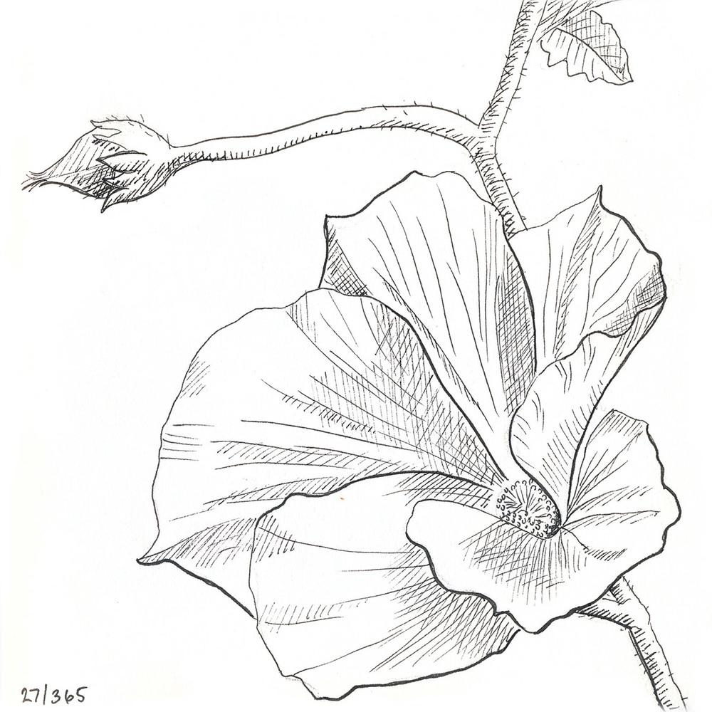 drawingsarah.com | 27/365