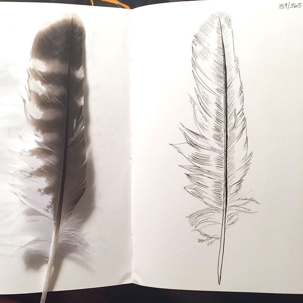 Feather found on my walk.