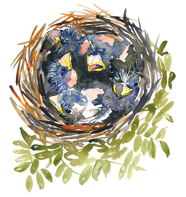 216/365 - Nest
