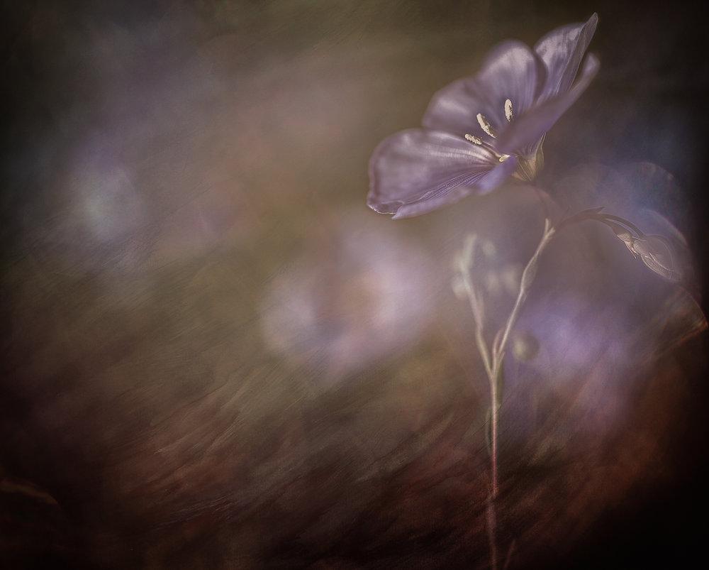 Quiet Evenings    © Michelle Jensen Photography