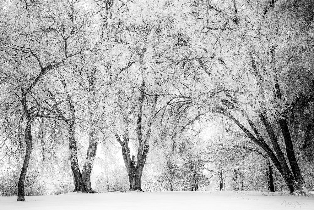 Cottonwood Canopy    © Michelle Jensen Photography
