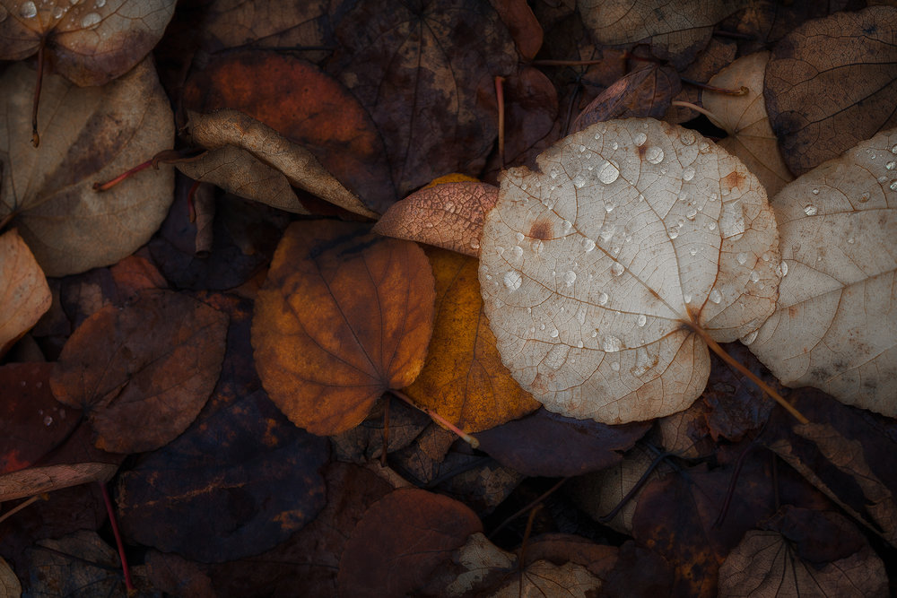 Below Our Feet in Autumn    © Michelle Jensen Photography