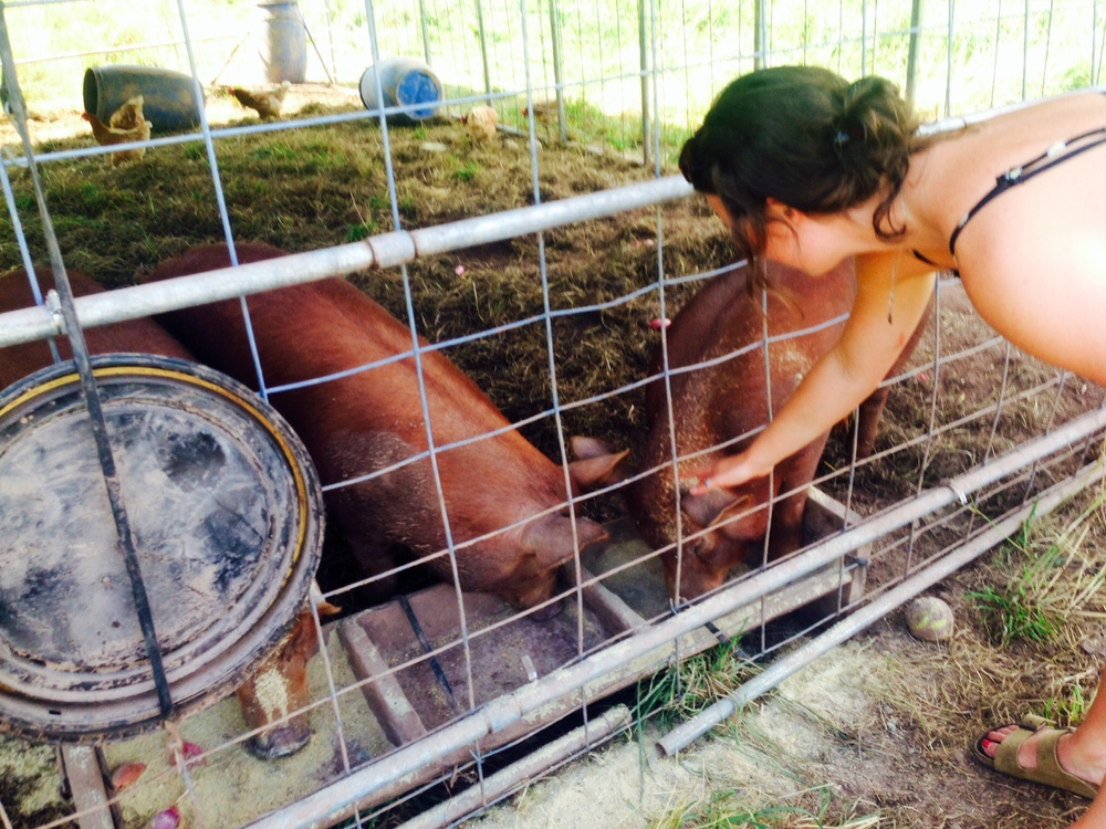 Marta and her Pigs at Great Road Farm- Skillman New Jersey