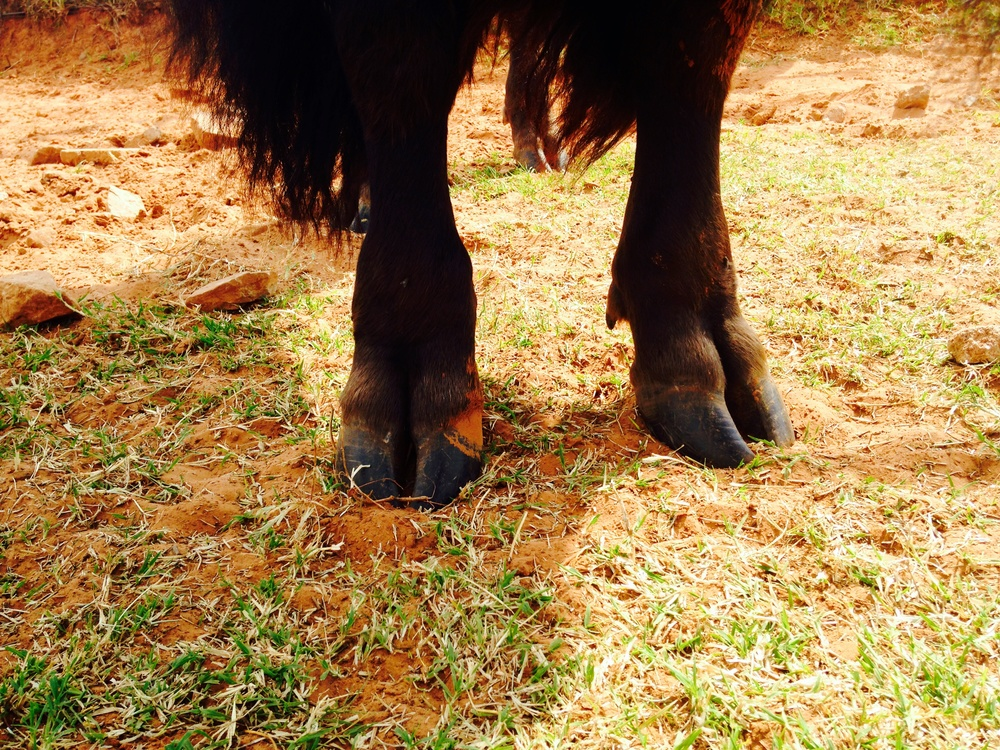 Stormy's Feet on the red earth of Oklahoma