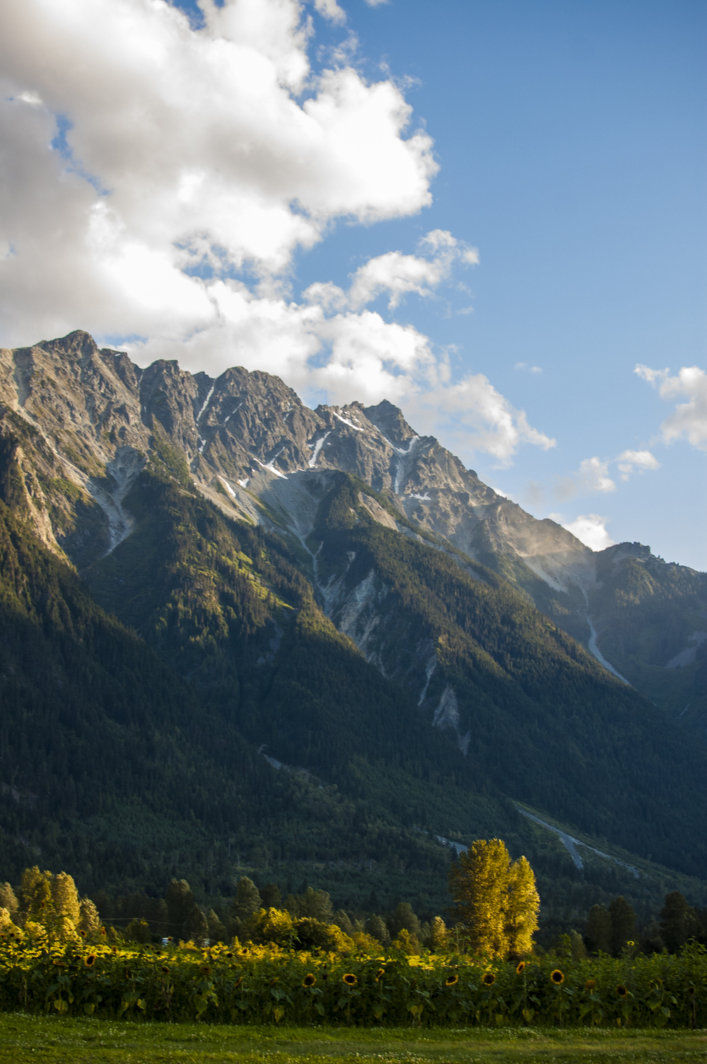 Fields & Mount Currie at North Arm Farm in Pemberton, British Columbia