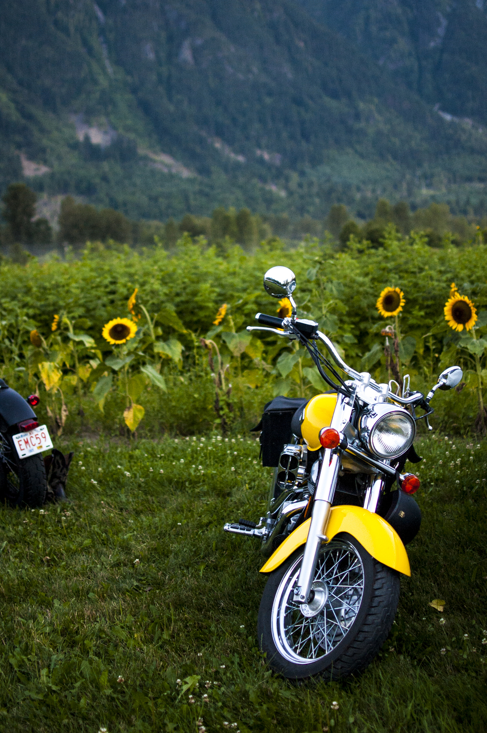 Sunflower Cycle in Pemberton, BC