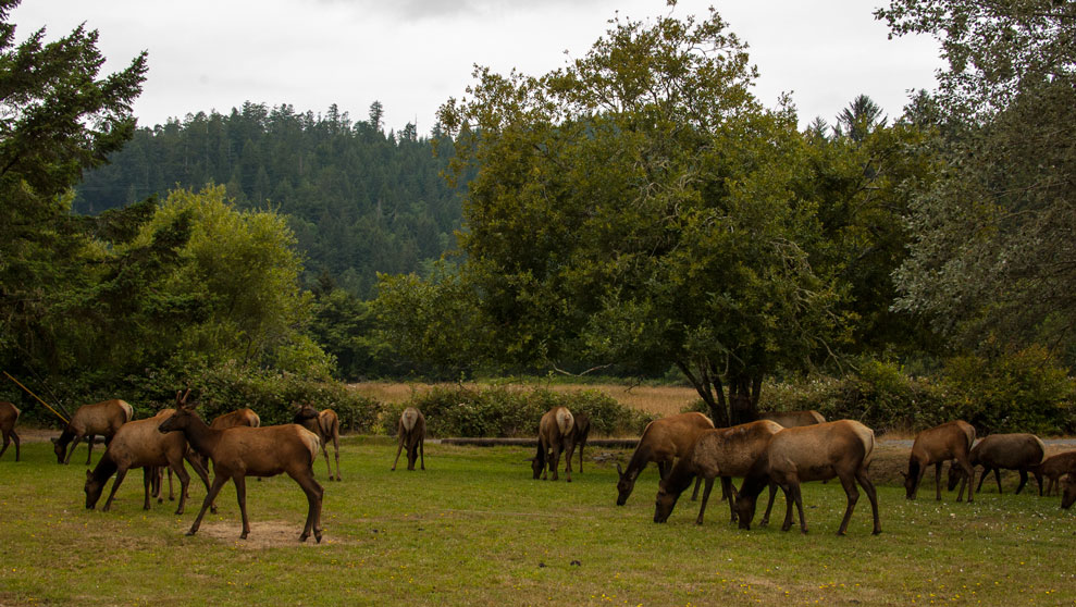 Elk Sightings in Oregon