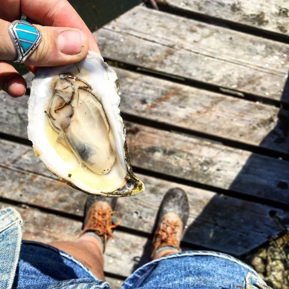Pemaquid Oysters in Damariscotta, Maine